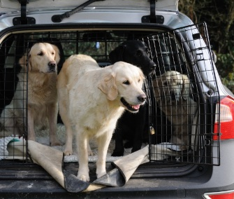 dogs in back of car crate