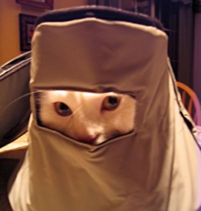 Cat hides in crock-pot cover