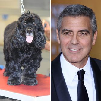 George Clooney and Dog Einstein