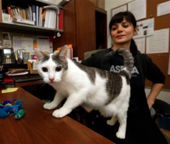 Joy, the last stray cat at the ASPCA's temporary shelter after Hurricane Sandy, finally has a new home.
