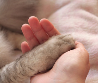 Cat Paw and Hand