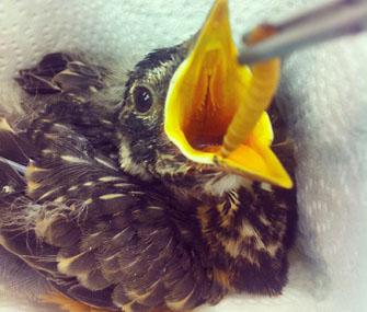 robin going through rehabilitation