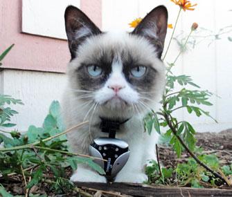 Grumpy Cat Wearing Dogtek Cat Cam