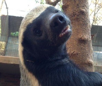 Tweeting Badger