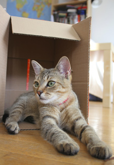Cat With Box