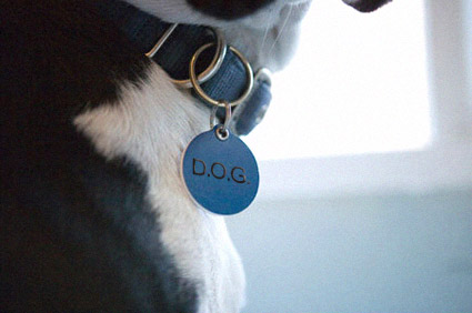 Close-up of Dog Tag ID