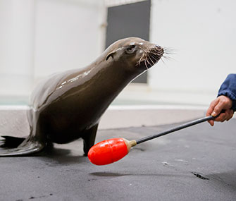 Cruz, a sea lion pup, is blind in both eyes.