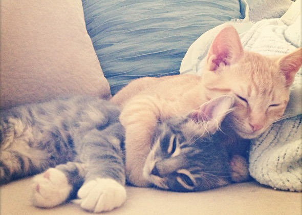 Kittens nap together.
