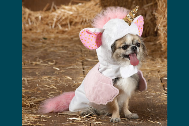 Is Your Dog Ready for Halloween? A Photo Gallery of 12 Funny Costumes to Buy