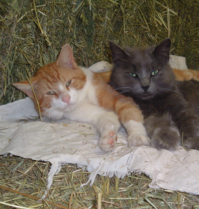 Cats on hay.