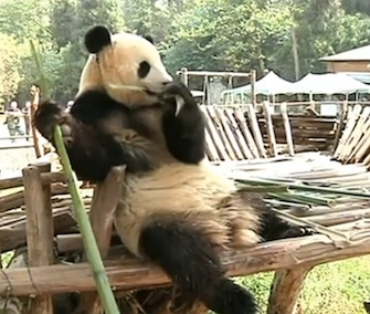 Keepers at a zoo in China built an amusement park within a panda's enclosure to cheer her up after her companion left the zoo.