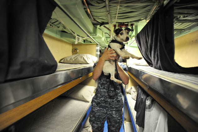 Lars the dog's handler lifts him from bunk to bunk on the USS Norfolk