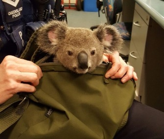 Alfred was rescued by Queensland police at a traffic stop.