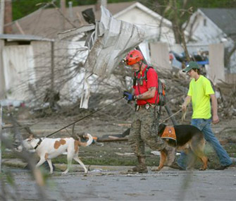 Search dogs and rescuers after tornado