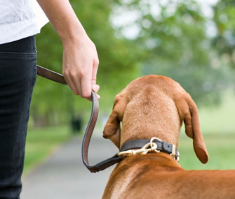 Hand holding dog leash