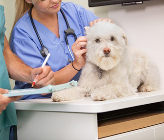 Vet and assistant examining dog