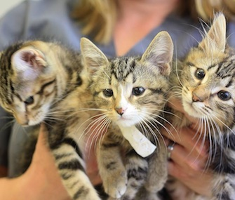 Five kittens born without eyelids had successful surgery to save their sight.