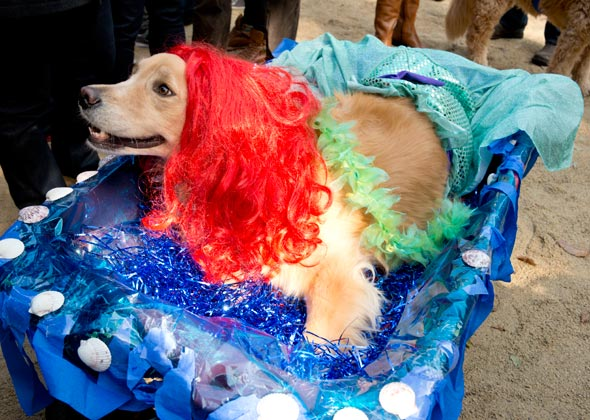 Dog Halloween Parade Little Mermaid