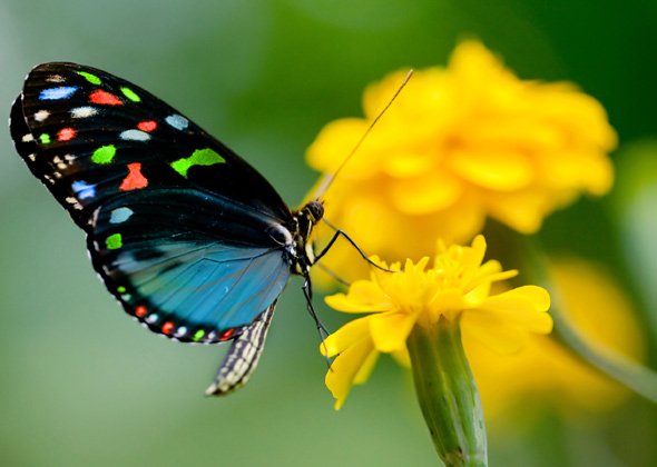 color butterfly on yellow flower