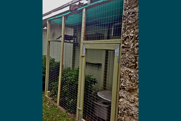 Wise Investment #6: Build a Catio