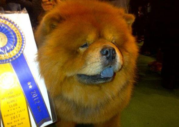 Martha Stewart's dog G.K.