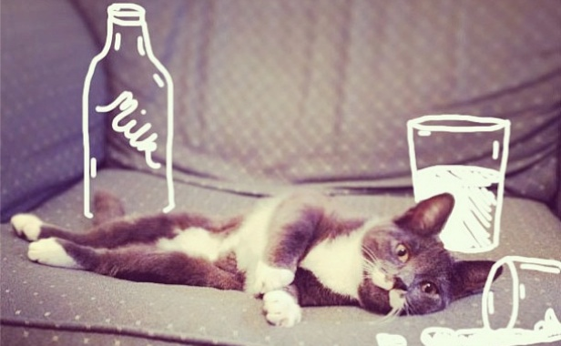 Instagram's idraw_on_cats spilled milk