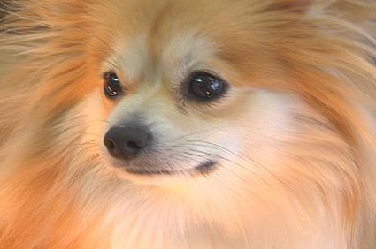 Honey Bun the dog that ate Diamonds