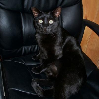 Hide and Seek Black Cat Camouflage