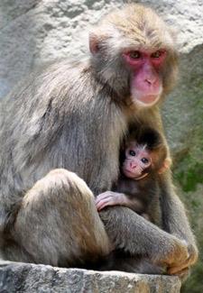 Japan names baby monkey Charlotte