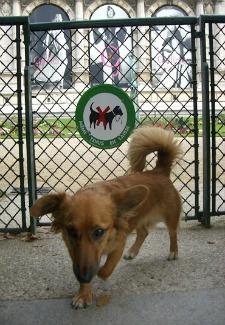 Dog in Paris