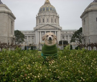 Frida, a Chihuahua mix, won a bid to be the honorary mayor of San Francisco for a day.