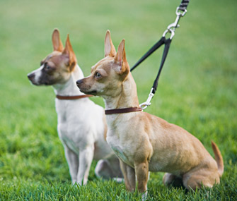 Two Dogs on Leash
