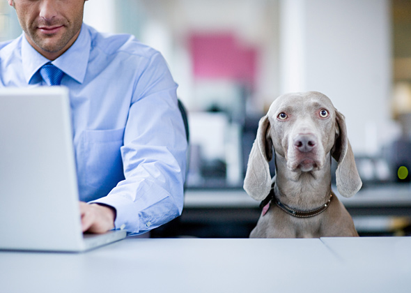 man sitting at desk with grey dog