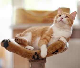 Cat at Spot