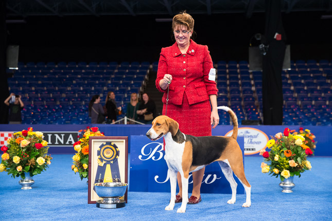 Jewel Best in Show National Dog Show