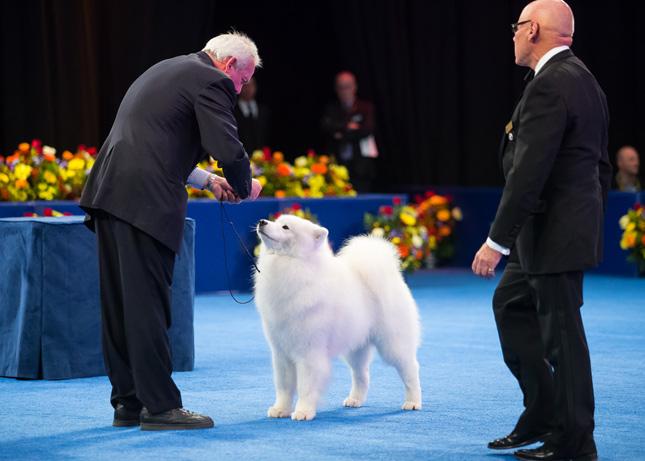 Bogey National Dog Show 2014