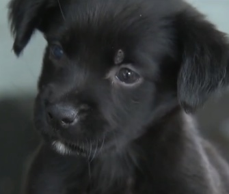 Puppy saved from Miami storm drain