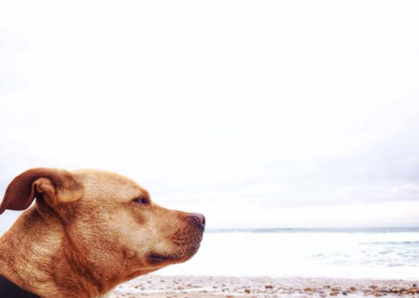 close up of dog on beach