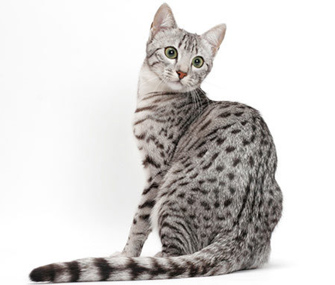 Cool Name For Cats Female