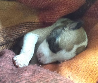 """""""Miracle"""" puppy Autumn was rescued from the trash thanks to a dog who found her."""