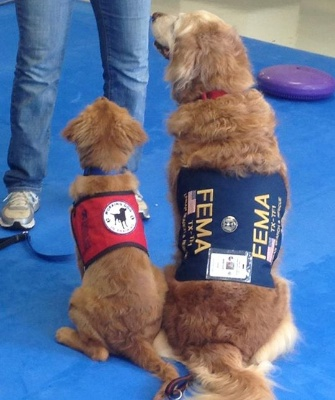 Bretagne sits with her namesake while the pup was training at the Penn Vet Working Dog Center.