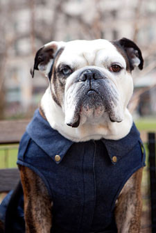 Expert Tips For Finding Coats To Fit Your Dog
