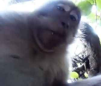 A curious monkey took off with a tourist's GoPro camera outside a Bali Temple, and took some selfies.