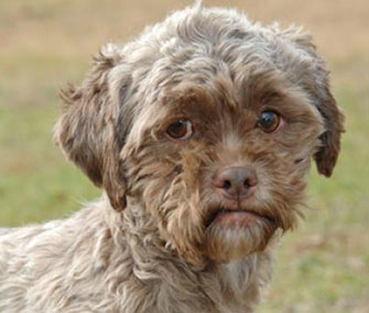 Tonik, famous for his human-like face, is up for adoption.