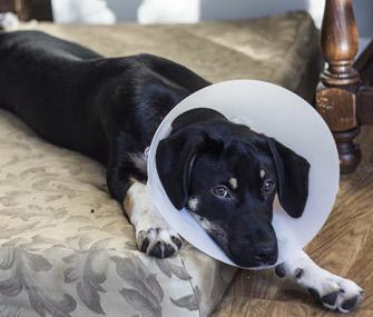 Dog wearing E-collar