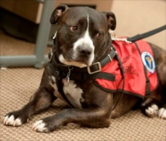 Service dog Cletus accepted a posthumous degree on his owner's behalf at Idaho State University.