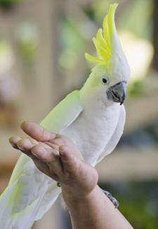 Bird Stepping on Hand