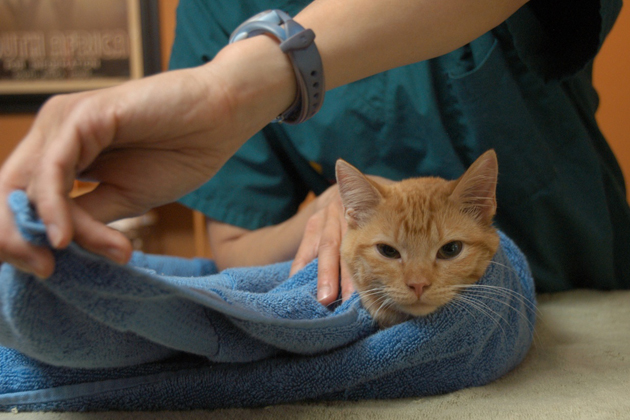 Cat Toweling Step 4
