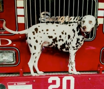 After nearly 15 years of helping FDNY Ladder 20, Twenty the Dalmatian passed away Tuesday.