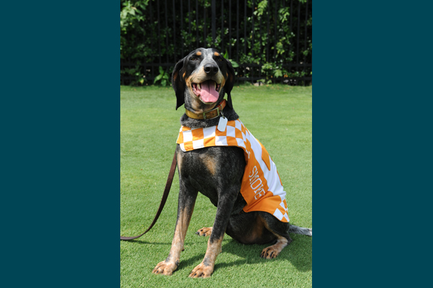 Smokey, University of Tennessee